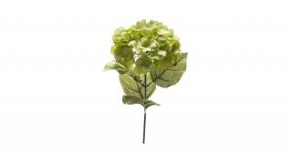 Hydrangea Green Spray