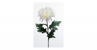 Chrysanthum White Spray
