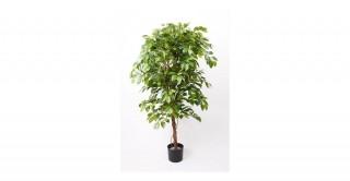 Ficus Deluxe 140Cm Trees