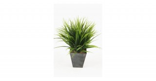 Grass 10Cm Potted Plant