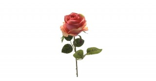 Rose Simone Pink Single-Stem
