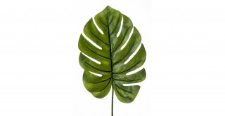 Monstera 95Cm Leaf