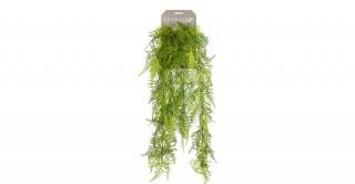 Asparagus Plumosus Hanging Bush X6 80Cm