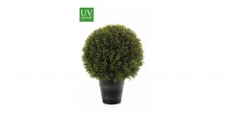 Boxwood D40Cm Potted Plant