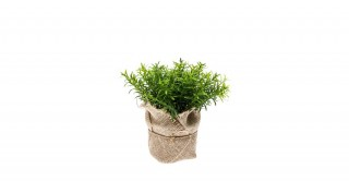 Thyme Bush 16Cm Potted Plant