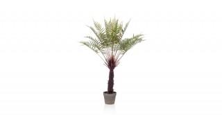 Fern Dicksonia Tree 105Cm In Pot
