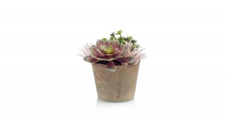Succulent Mix In Tc Pot Aged Round 16Cm