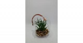 Chester Plant Green 11 cm