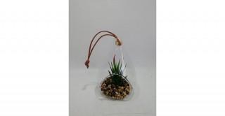 Chester Plant Green 11.5 cm