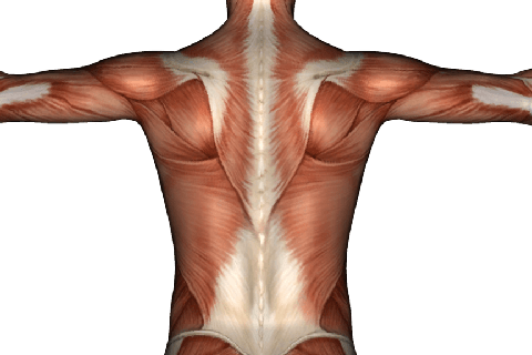 The Stretching of the Lumbar