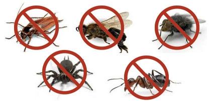 صنع لعدد من الحشرات