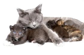 معلومات إضافية: إطعام القطط الصغيرة