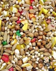 Healthy Parrot Food