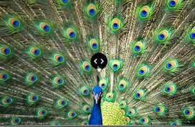 Sharpen Your Content With UHD Upscaling